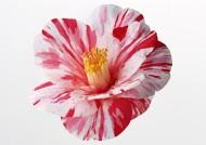 花卉造型特写图片_102张