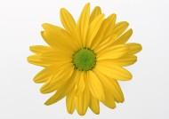 黄色花朵图片_9张