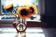 花瓶里的花朵图片_20张