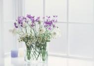 居家紫色插花图片_49张
