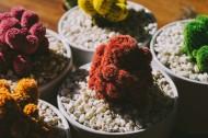 各种各样的可爱盆栽图片_15张