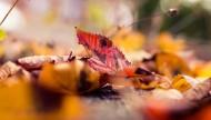 深秋泛黄的落叶图片_10张