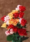 玫瑰花束图片_7张