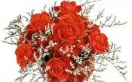 浪漫玫瑰图片_23张