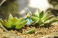 清新的盆栽图片_21张