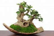 姿态优美的绿色植物盆栽图片_8张