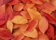 秋季落叶背景图片_20张