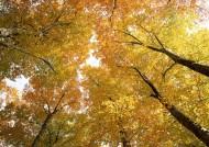 秋季树木图片_26张