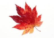 秋季树叶特写图片_47张
