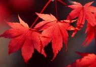 秋季动植物图片_26张