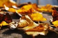 秋天的落叶图片_10张