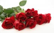 玫瑰图片_20张