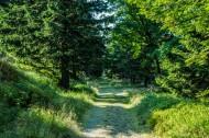 森林植物图片_12张