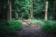 森林植物的特写图片_13张