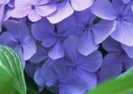 神秘的紫色花丛图片_18张
