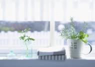 室内植物草药图片_32张