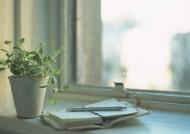 室内盆栽图片_53张