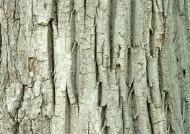 树皮的图片_85张