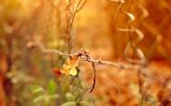 唯美秋天树枝与树叶图片_11张