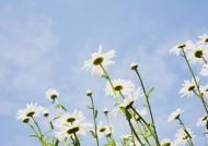 阳光下的白色小花图片_19张