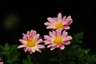 路边灿烂的野花图片_7张