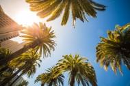 高大的椰树图片_13张