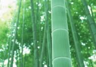 竹子图片_47张