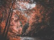 秋天树林风景图片_14张