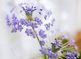 一组超好看的小清新花卉图片欣赏