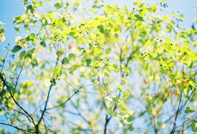 一组阳光照耀下唯美的树叶图片欣赏