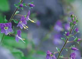 一组好看的简单紫色野花图片欣赏