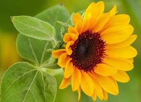 襄阳而开的花 颜色里已经充满阳光的味道