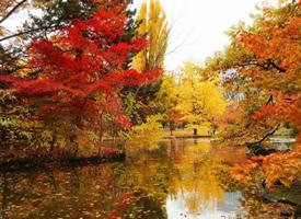 枫林尽染的深秋美景高清桌面壁纸图片大全