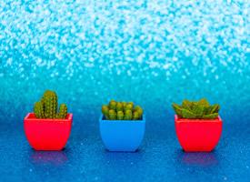 一盆盆彩色的迷你仙人掌盆栽图片欣赏
