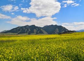 绿草青青,山花烂漫的新疆雪岭鹰沟唯美风景图片