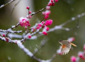 春有百花秋有月,夏有凉风冬有雪