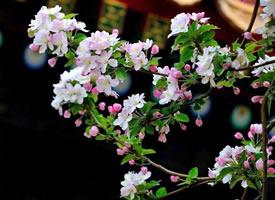 红尘匹马知音少,人与花俱好,花与人俱老