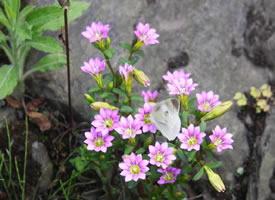 谦卑的心是宛如野草小花的心,不取笑外面的世界