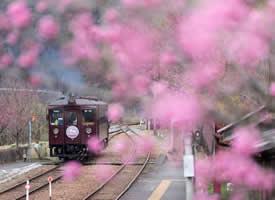 一组特别美丽的开往春天的火车