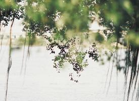 一组清新好看春天的自然风光美景图片