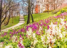 一组风和日丽的布达佩斯的春天图片