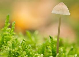 漂亮的野生蘑菇高清图片欣赏