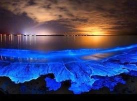 想和心爱的人去一次马尔代夫Vaadhoo岛,一起去捞海里的星星