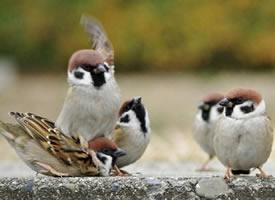 小麻雀们各种活泼可爱,还有互殴、胖揍的名场面