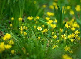 一组繁星点点的黄色野花图片欣赏