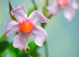 小清新养眼花卉唯美高清桌面壁纸