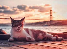 伊斯坦布尔的黄昏是格外漂亮的美景