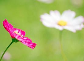 春季清新唯美花卉图片电脑壁纸
