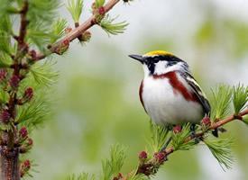 一组超级可爱的野外小鸟图片欣赏