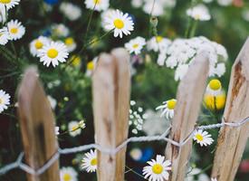 一组春天时唯美的花开图片欣赏